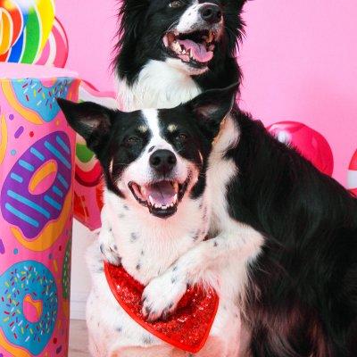 Собачки для тематической вечеринки